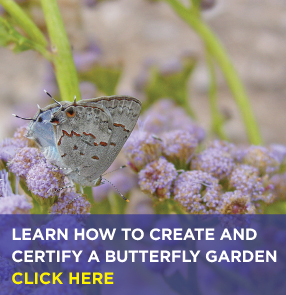 Learn how to build a butterfly garden. Click here.