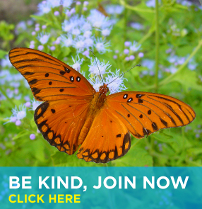 Be Kind, Join Now