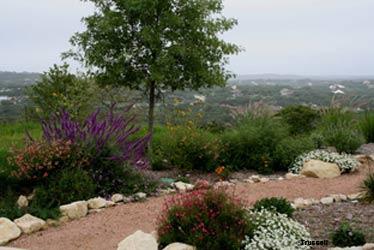 Located In A Rural Area North Of San Antonio, This Garden Uses A Variety Of  Asters, Salvias, Cone Flowers, And Daisies As Nectar Plants, Including  Blood ...